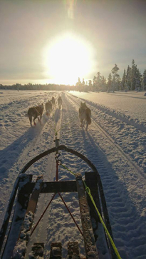 dog sled snow Lena Bjelfman Tentipi light sun blog